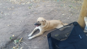 SaTee, the dog who adopted us for the weekend