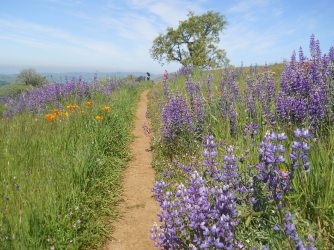 Hiking in California foothills
